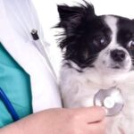 Mejores cursos de veterinaria Madrid